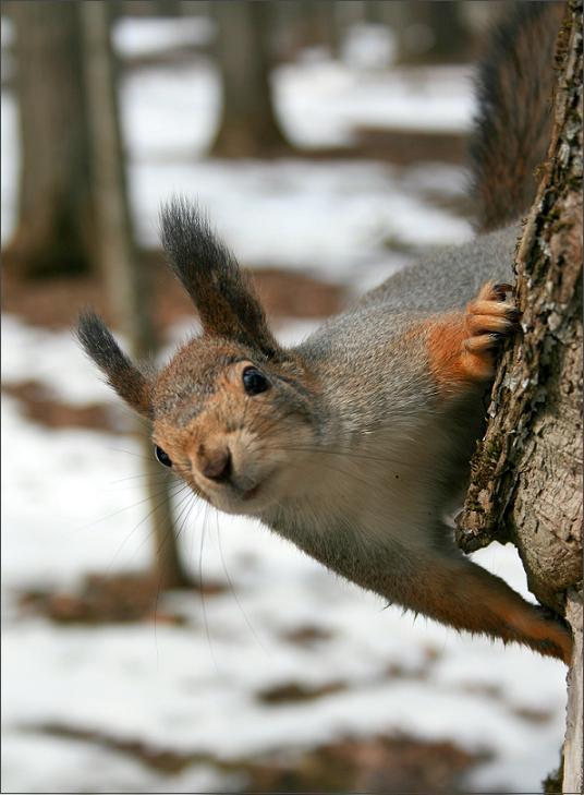 oravad-aprillis-2.jpg