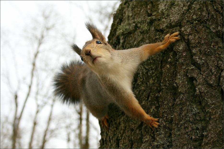 oravad-aprillis-3.jpg